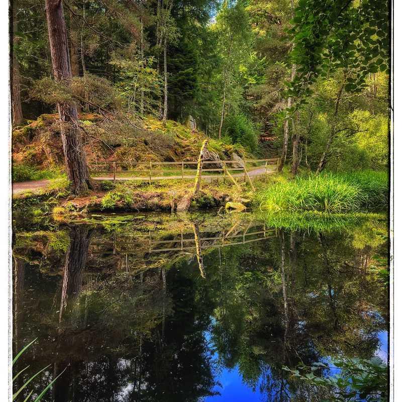Faskally Forest