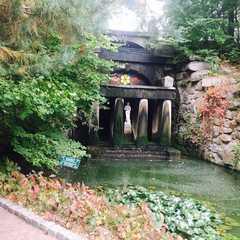 Arboretum Sofiyivka
