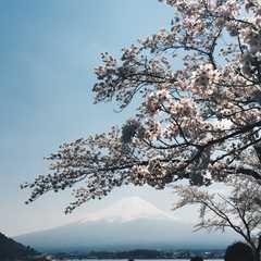 Mount Fuji | POPULAR Trips, Photos, Ratings & Practical Information