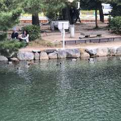 Ohori Park - Photos by Real Travelers, Ratings, and Other Practical Information