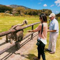 Cape Point Ostrich Farm