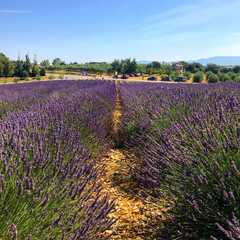 Provence - Selected Hoptale Trips