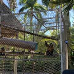 Zoological Wildlife Foundation - Photos by Real Travelers, Ratings, and Other Practical Information