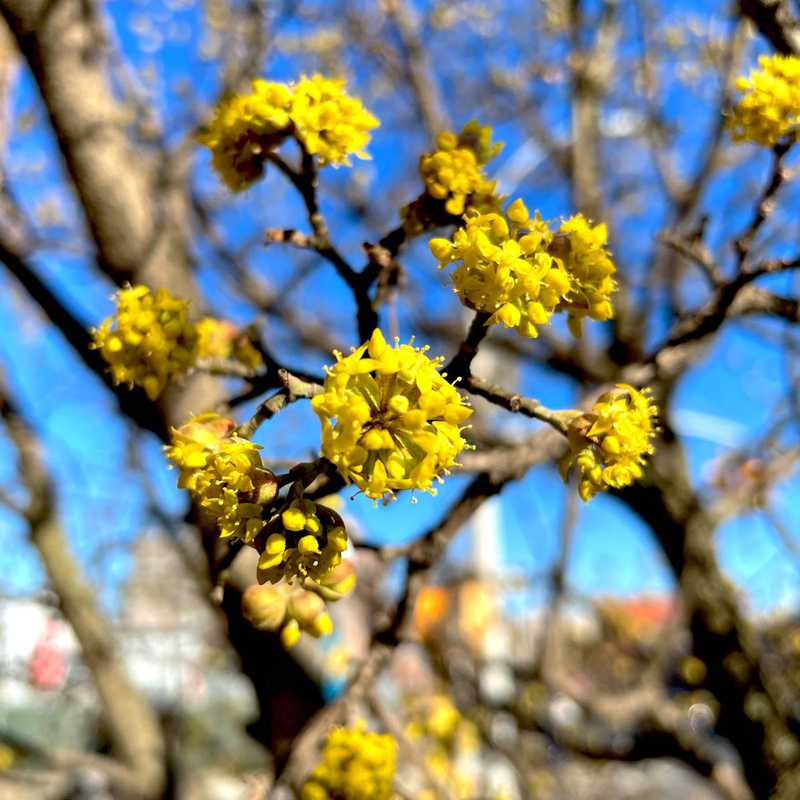Trip Blog Post by @evette: Spring Blossoms NY 2021 | 3 days in Mar/Apr (itinerary, map & gallery)