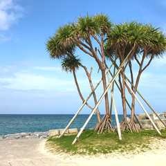 Okinawa - Selected Hoptale Photos