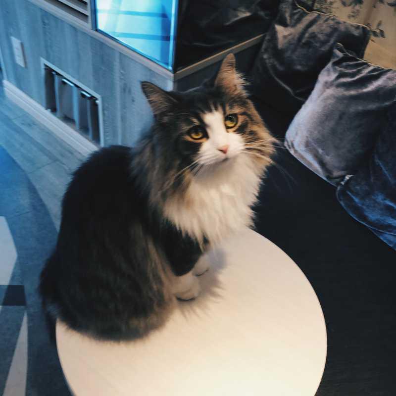 Cat Cafe MOCHA Harajuku