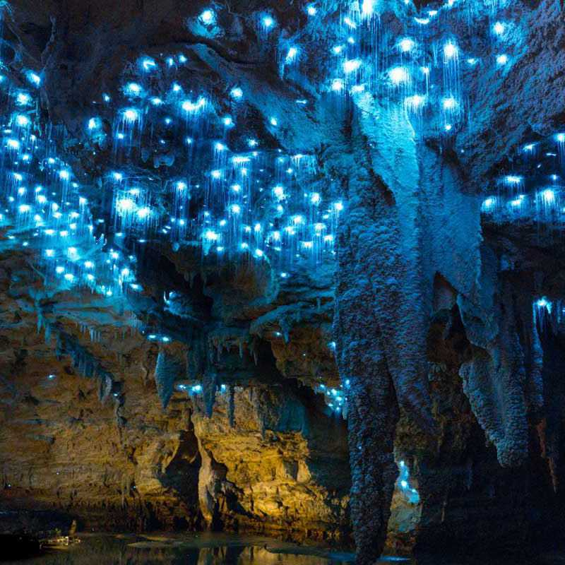 Trip Blog Post by @ASHIYK: NEW ZEALAND❤️WAITOMO CAVES 😍 | 1 day in Apr (itinerary, map & gallery)