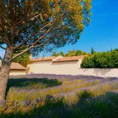The Lavender Museum