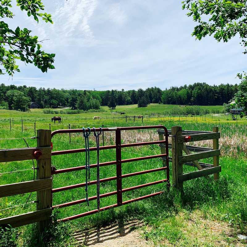 Wild Iris Farm