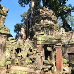 Ta Prohm Temple - Photos by Real Travelers, Ratings, and Other Practical Information
