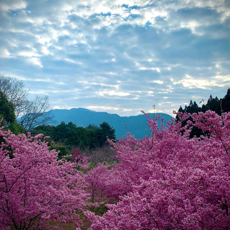 Fushoushan Farm, Taiwan  •  1 March 2021