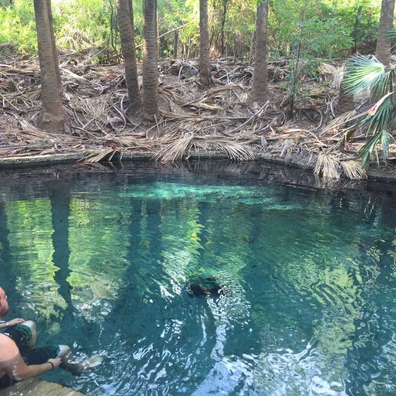 Mataranka Thermal Pool and Rainbow Springs