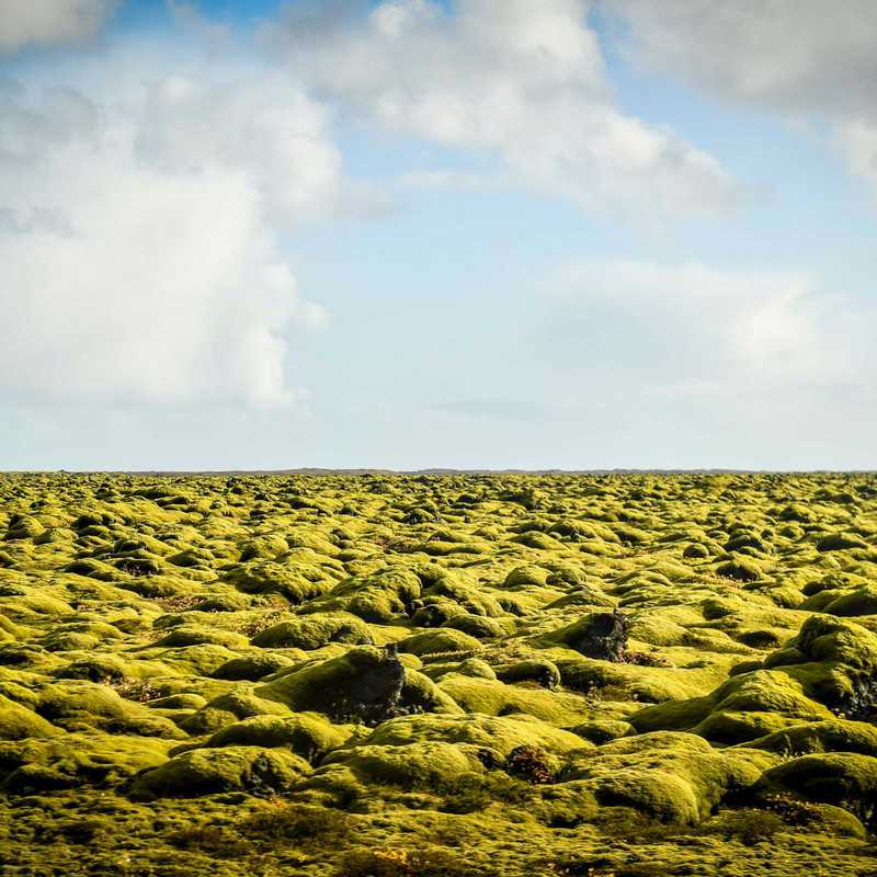 Mossy Lava Rocks