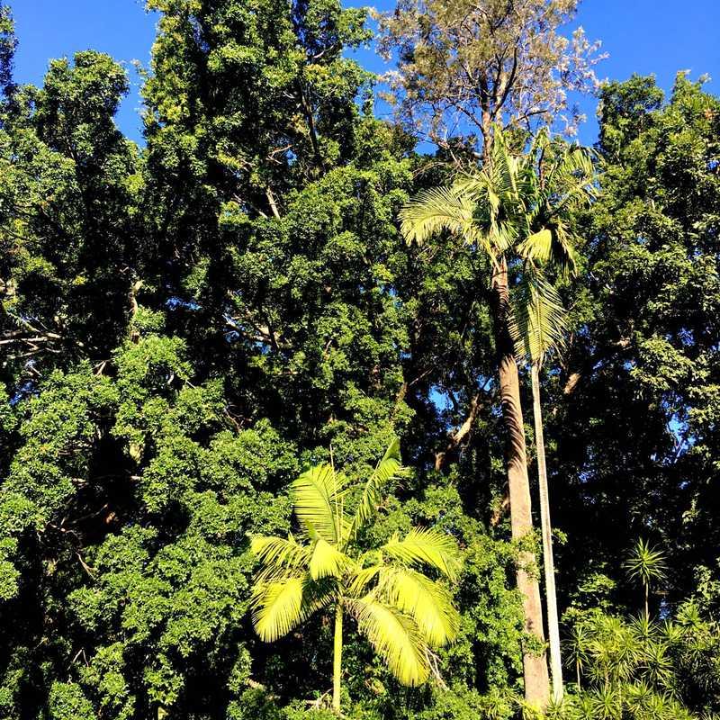 Brisbane City Botanic Gardens