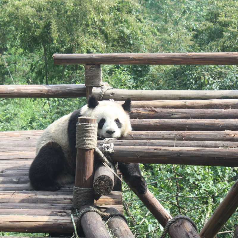 Chengdu Research Center of Giant Panda