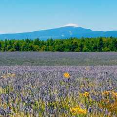 a good view of Mont Ventoux outside Ferrassieres on our way to Revest du Bion