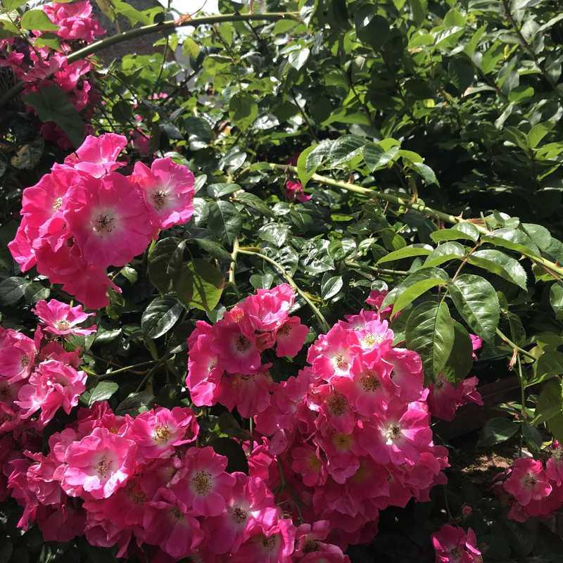 Veules-les-Roses