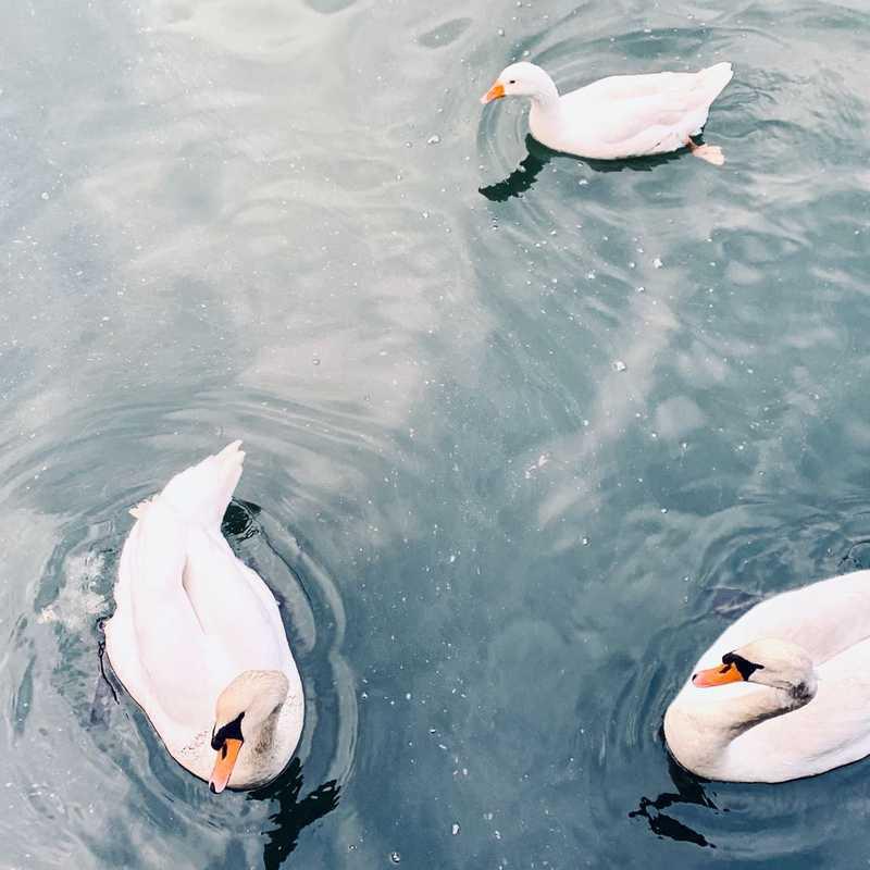 Penryn River
