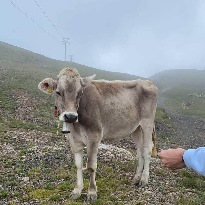 Trip Blog Post by @vandapalkovicova: Switzerland 2021   4 days in Aug (itinerary, map & gallery)