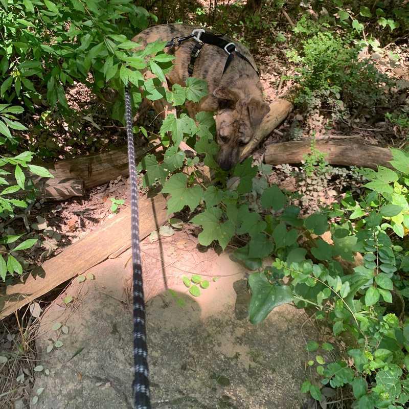 Noonday Creek Trail