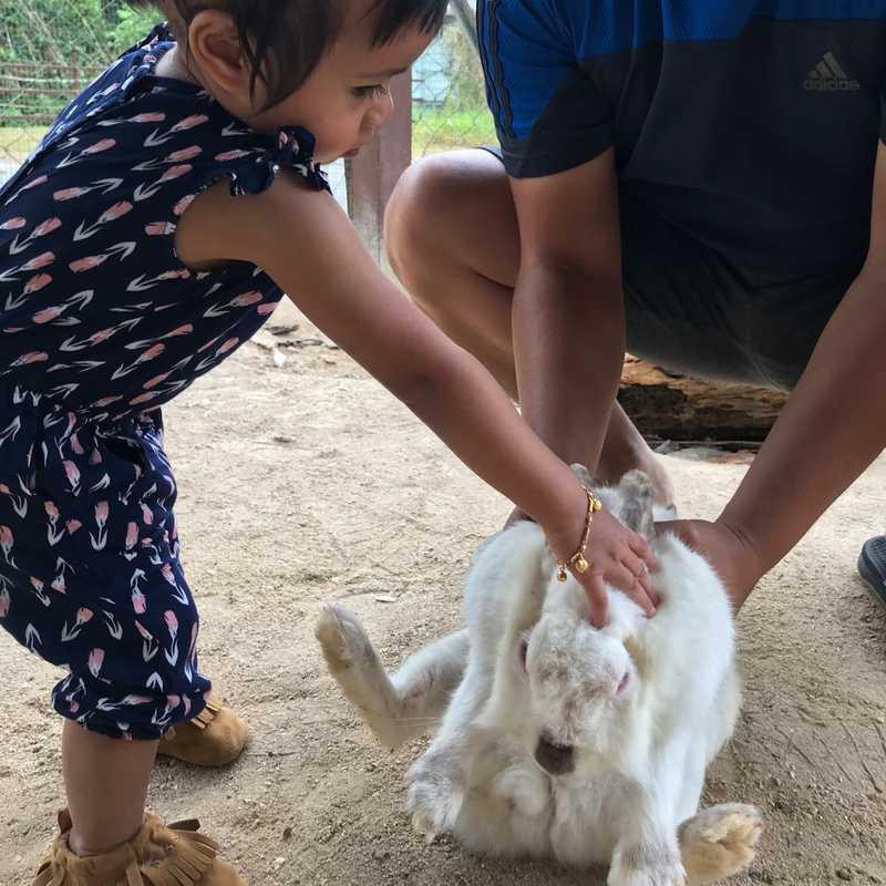 Rabbit Farm (Bukit Tinggi)