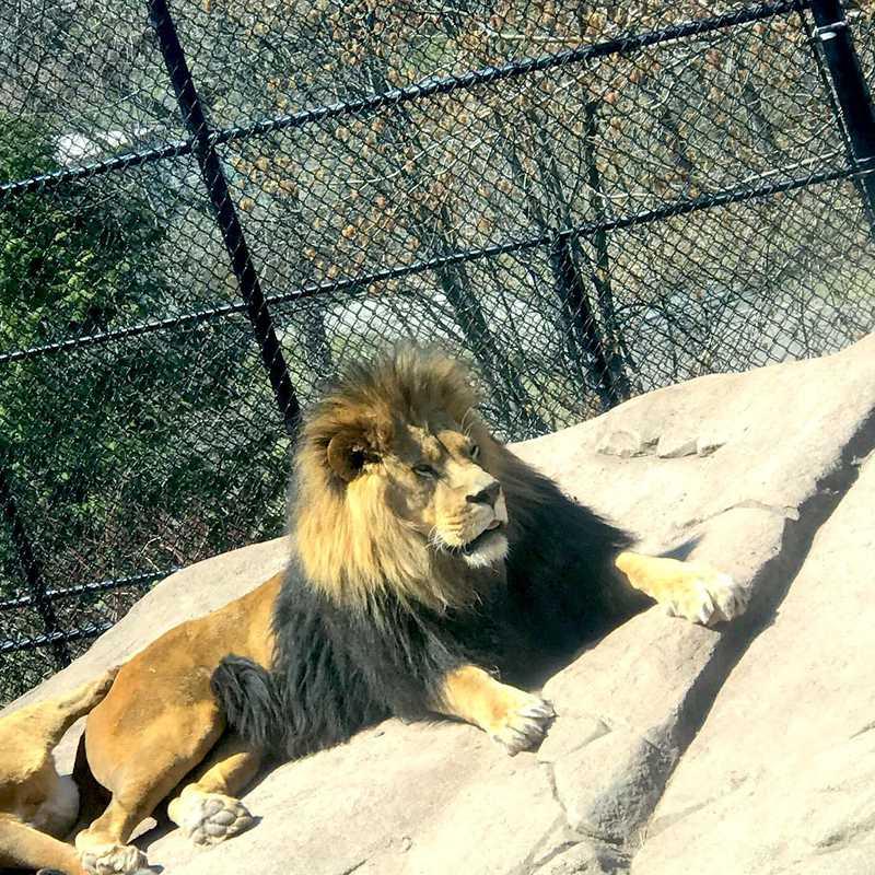 Lake Superior Zoo