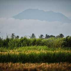 Gianyar Regency - Selected Hoptale Trips