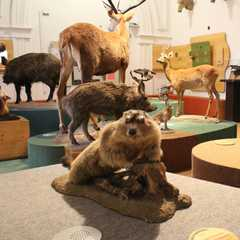 German Hunting and Fishing Museum | Travel Photos, Ratings & Other Practical Information