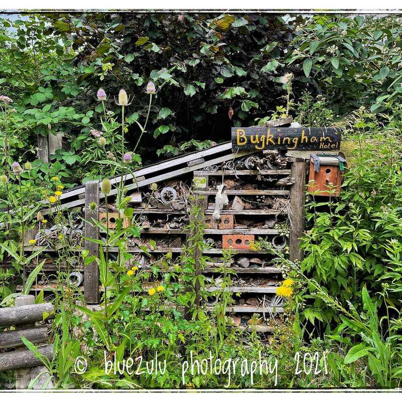 Severn Farm Pond Nature Reserve