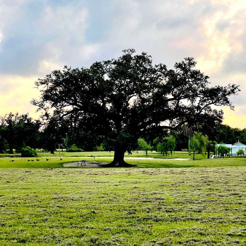 The Singing Oak: Round #2