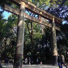Meiji Jingu / 明治神宮 | Travel Photos, Ratings & Other Practical Information