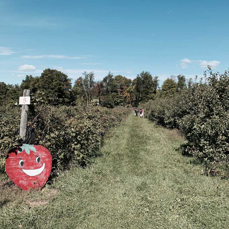Ellsworth Hill Orchard and Berry Farm