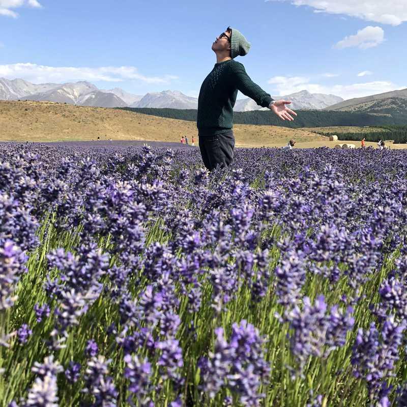NZ Alpine Lavender