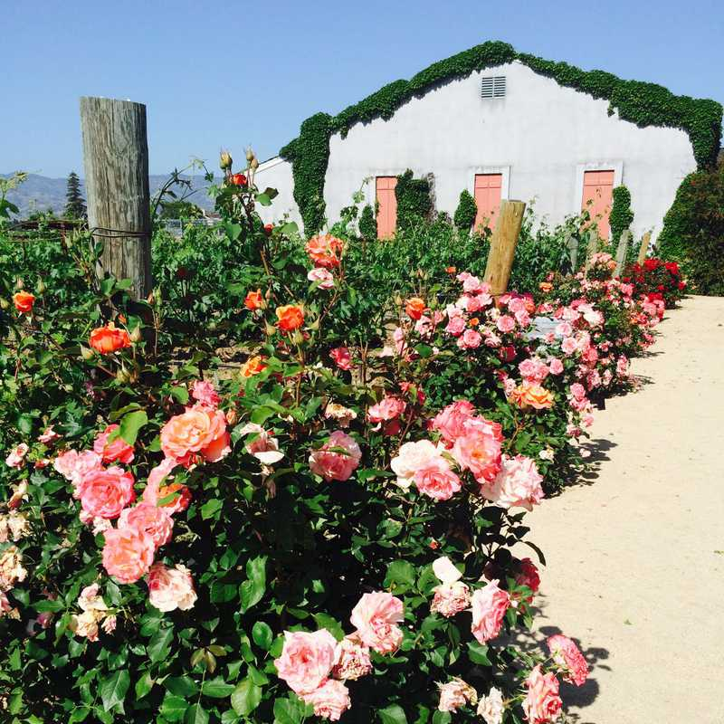 Trip Blog Post by @JenniferM: Yountville & Napa Weekend   3 days in May (itinerary, map & gallery)