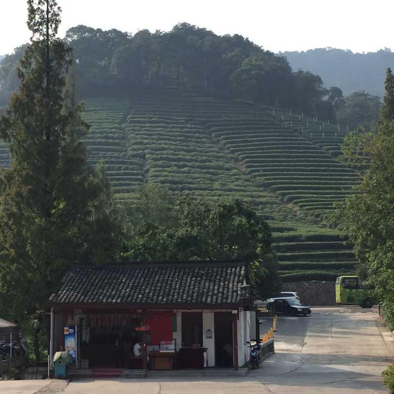 China International Tea Culture Institute