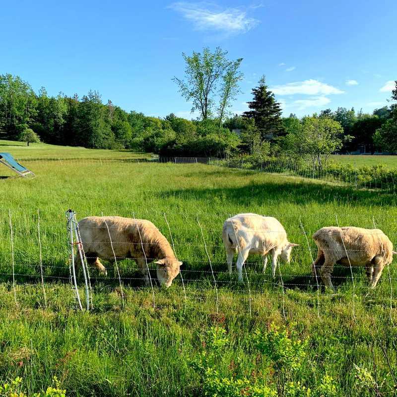Peggy Rockefeller Farm