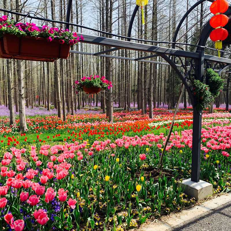 Dongping National Forest Park