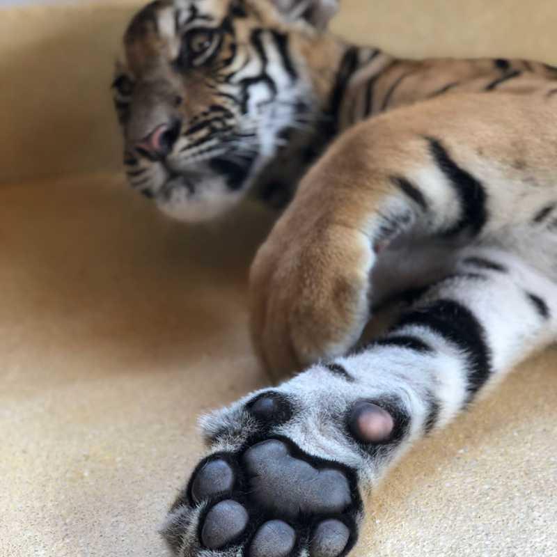 Tiger Park Phuket
