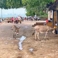 Lamu Island   POPULAR Trips, Photos, Ratings & Practical Information