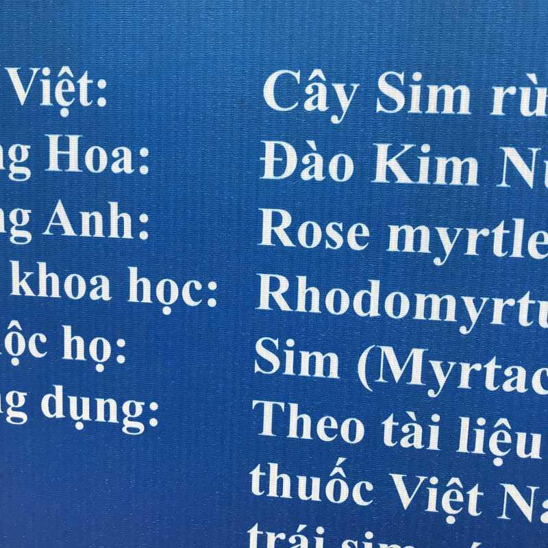 Sim Sơn Phú Quốc