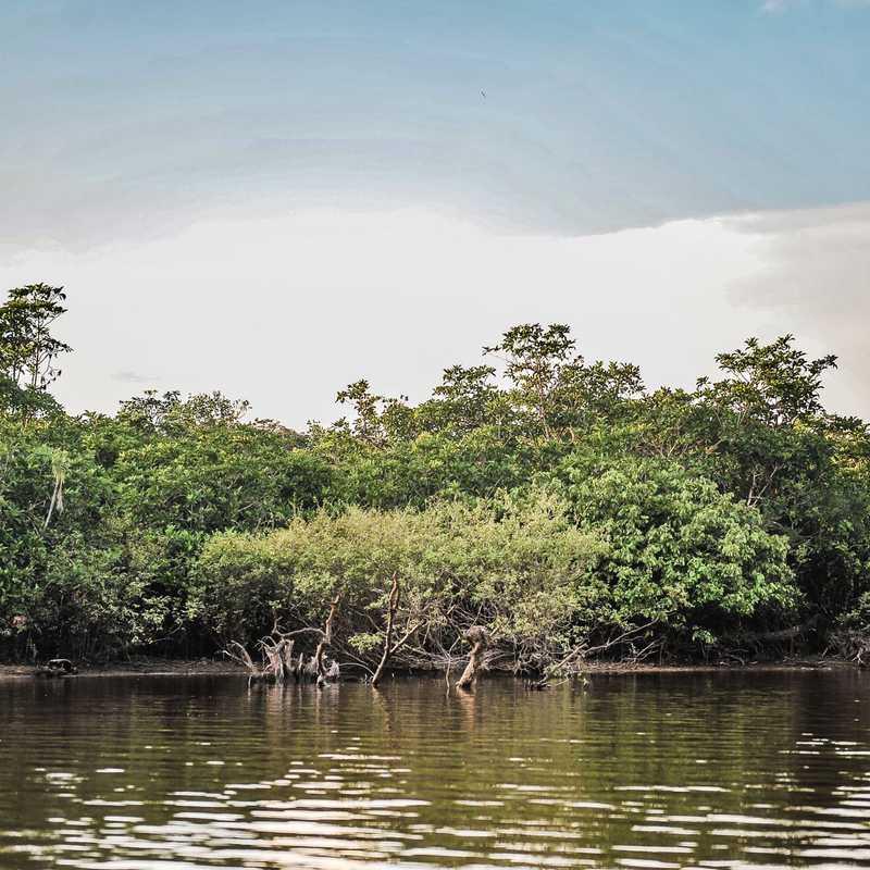 Cuyabeno Wildlife Preserve