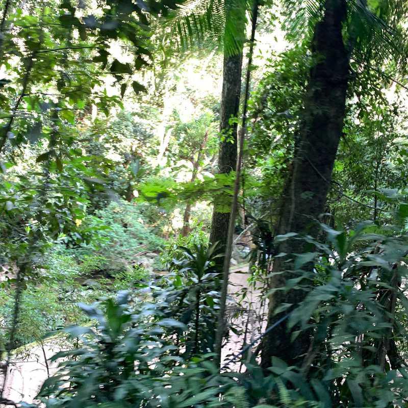 Parc national de la Tijuca