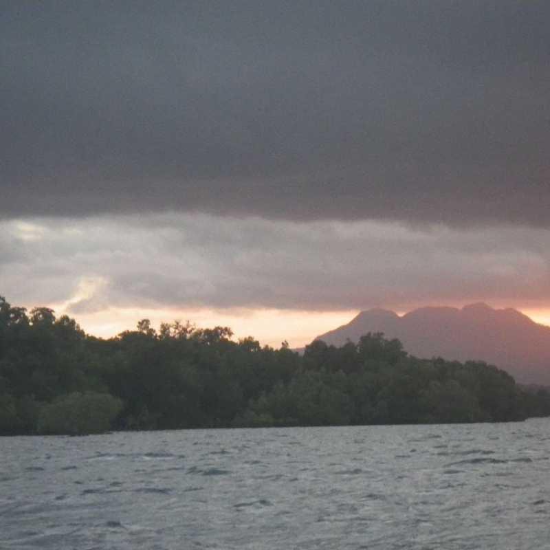 Bush Island Palawan