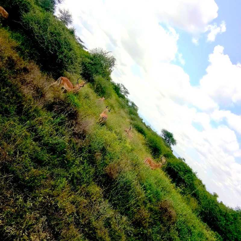 Nairobi National Park Marker 14A