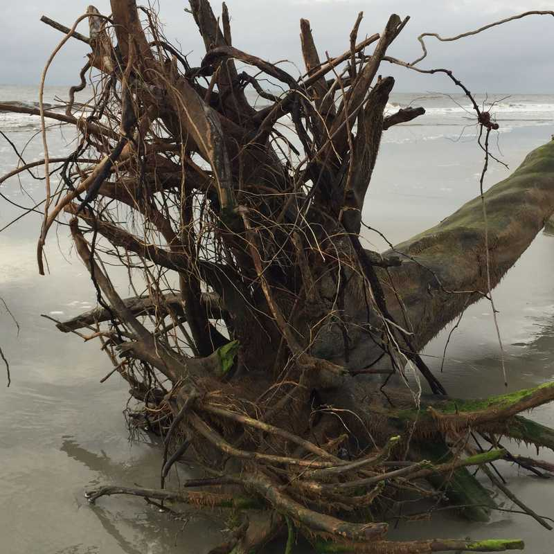 Trip Blog Post by @kari: Jekyll Island & GA 2015   3 days in Sep (itinerary, map & gallery)
