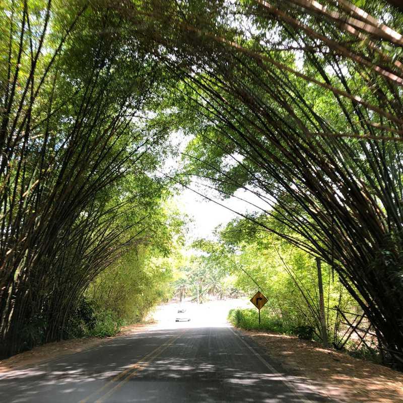 Bambuzal -Santa Rita-PB , EUAMOAPARAIBA
