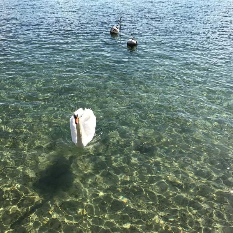 Stroll along Lake Geneva