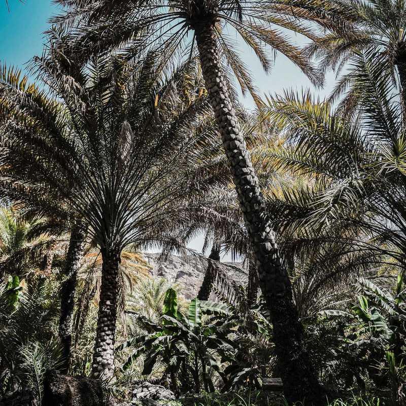 Misfat Al Abriyen