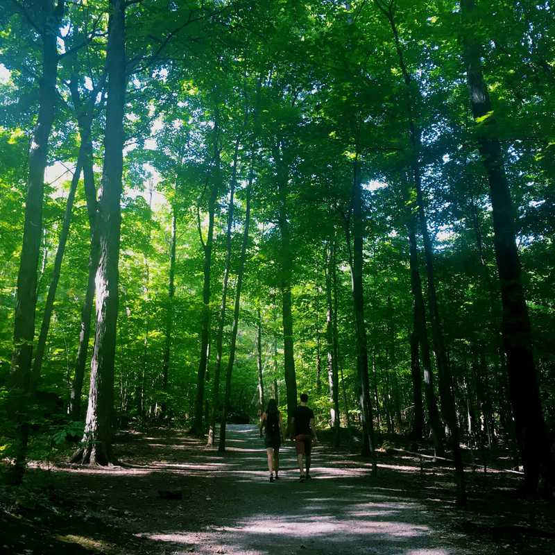 Hike Mount Royal
