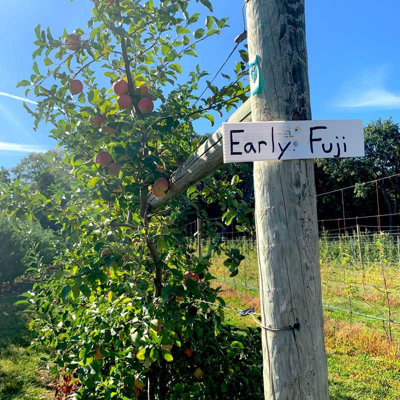 Apple Picking st Terhune Orchards